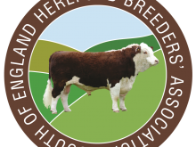 Coverwood Poll Herefords